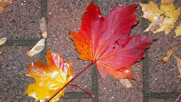 Листья осенью - Sputnik Беларусь