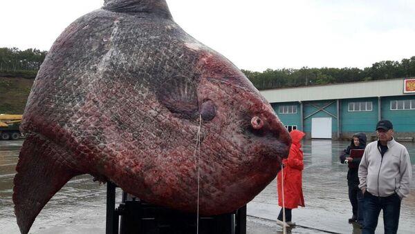 Злоўленая рыба-месяц - Sputnik Беларусь