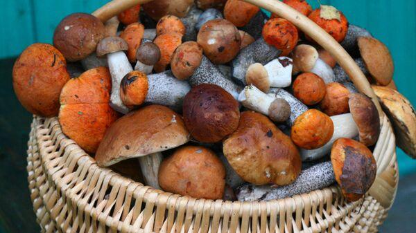 Корзина с грибами - Sputnik Беларусь