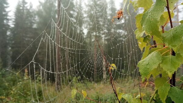 Лес, архіўнае фота - Sputnik Беларусь