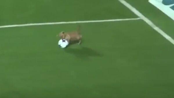 Собака на полі - Sputnik Беларусь
