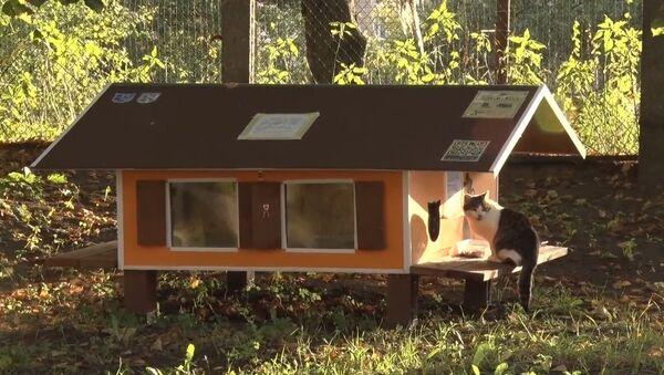 Рижанин построил 80 домиков для бездомных кошек - Sputnik Беларусь