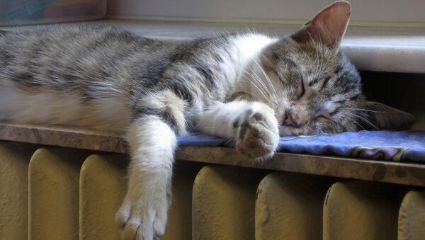Кот на радиаторе - Sputnik Беларусь