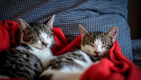 Коты отдыхают на кровати, архивное фото - Sputnik Беларусь