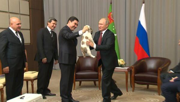 Гурбангулы Бердымухамедов подарил Путину щенка алабая - Sputnik Беларусь