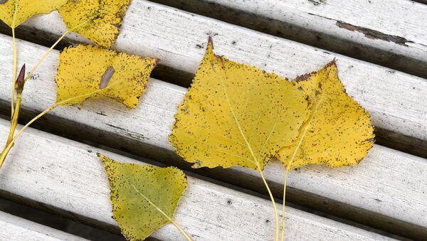 Осенние листья - Sputnik Беларусь