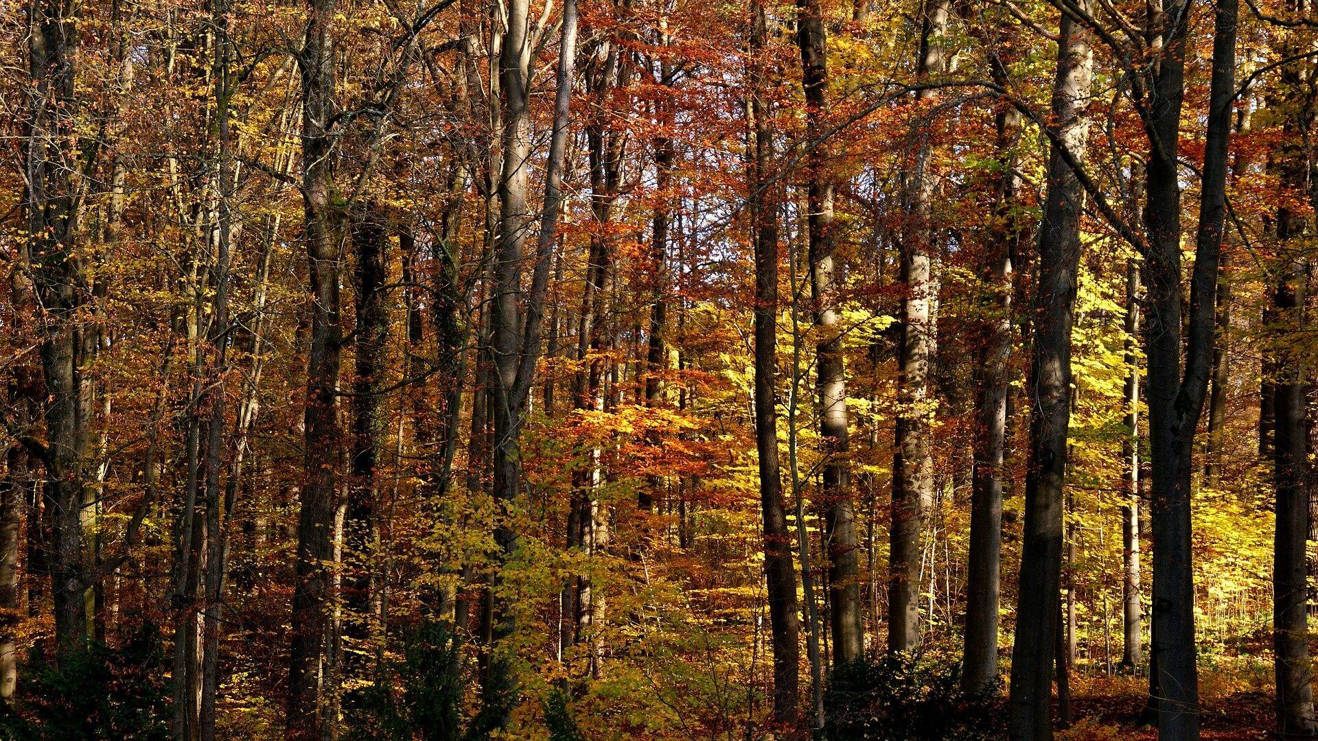 Осенний лес, архивное фото - Sputnik Беларусь, 1920, 08.10.2021