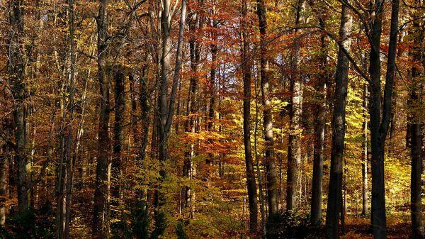 Осенний лес, архивное фото - Sputnik Беларусь