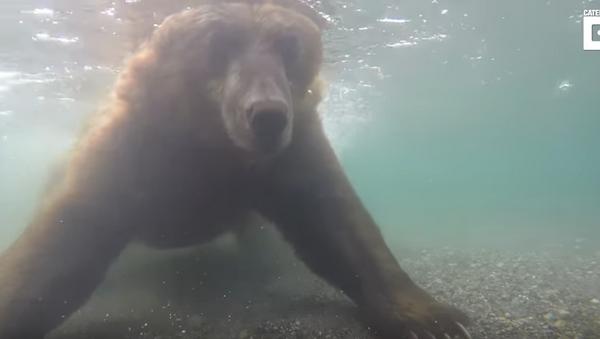 Падводныя здымкі: як мядзведзь ловіць рыбу - Sputnik Беларусь