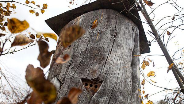 Бортный мед - колода в лесу - Sputnik Беларусь