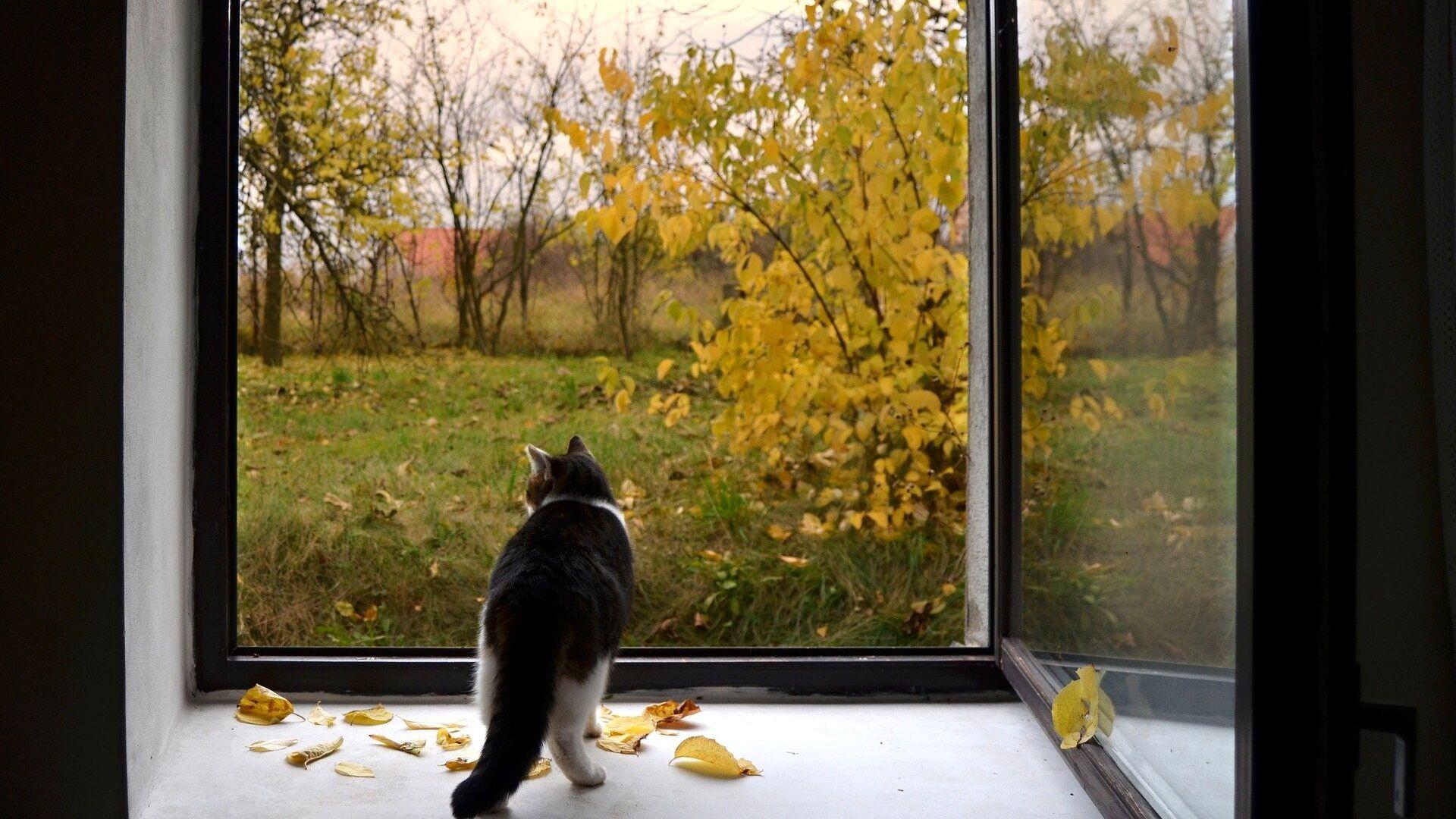 Кот на окне, архивное фото - Sputnik Беларусь, 1920, 22.09.2021