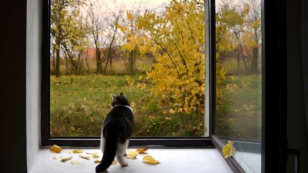 Кот на окне, архивное фото - Sputnik Беларусь