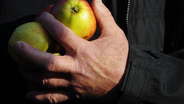 Фермер з яблыкамі - Sputnik Беларусь