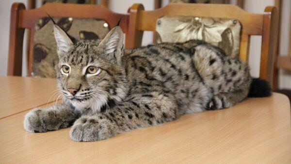 Чалавек і кошка: гісторыя сапраўднай спецназаўскай дружбы - Sputnik Беларусь
