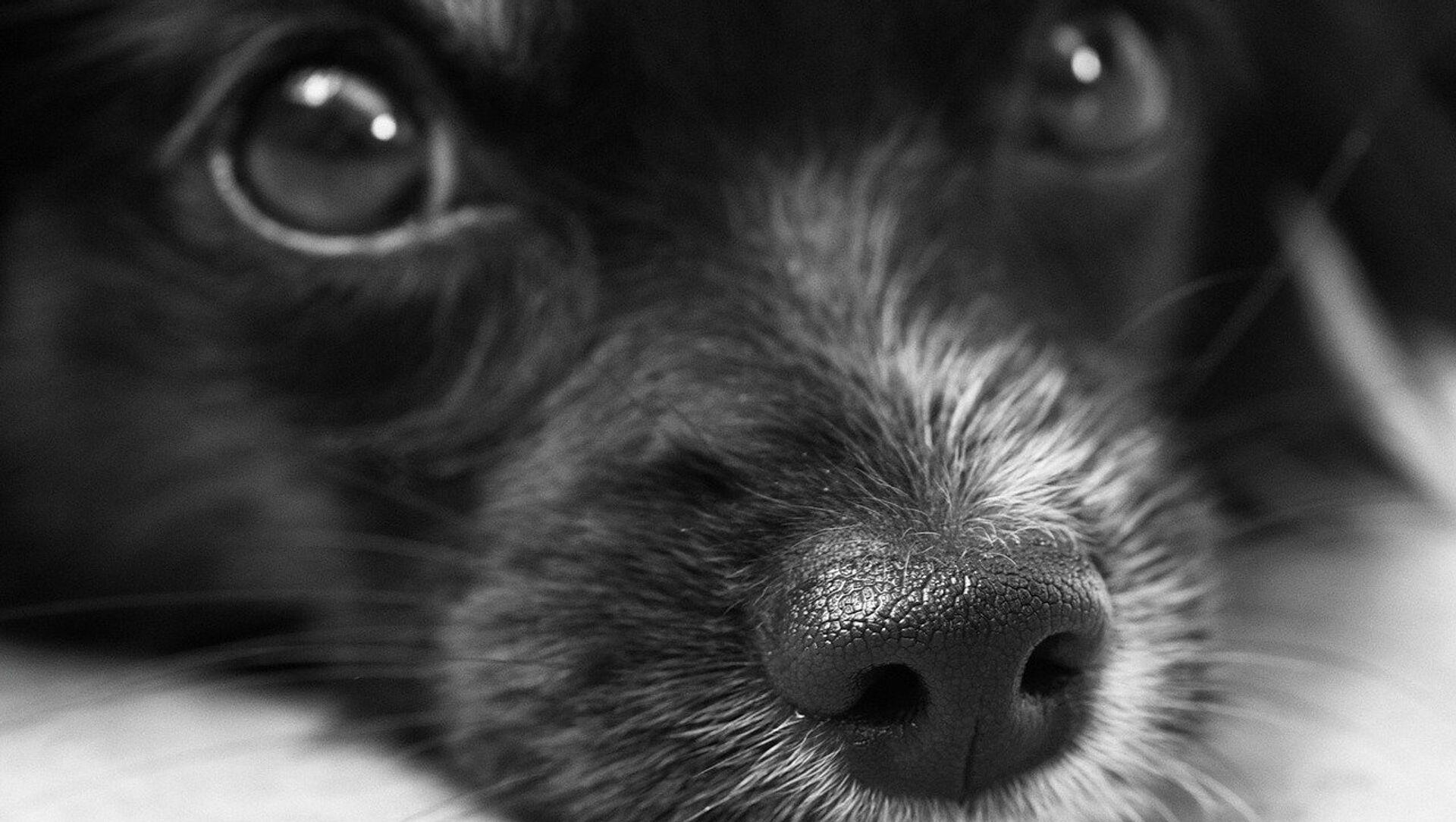 Собака, архивное фото - Sputnik Беларусь, 1920, 02.03.2021