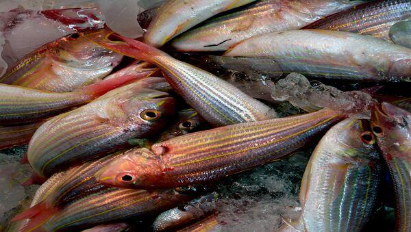 Марозіўная рыба - Sputnik Беларусь