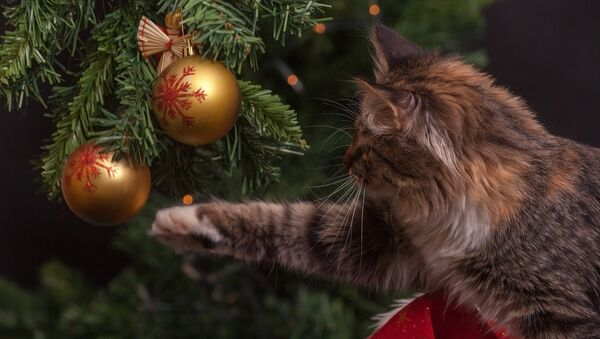 Новый год с котом - Sputnik Беларусь