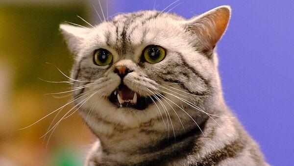 Кот, архивное фото - Sputnik Беларусь