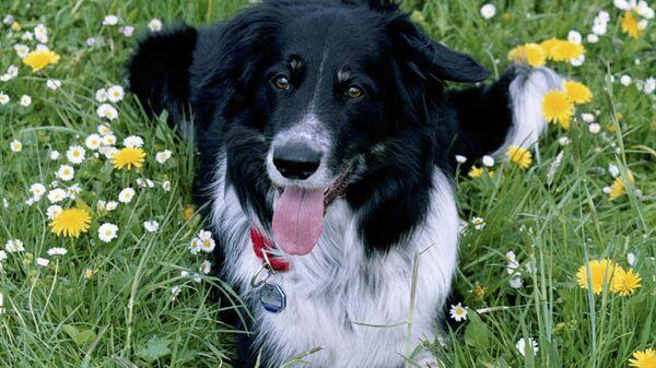 Rico (dog) - Sputnik Беларусь