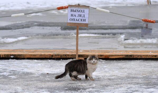 Жыхарка выратавальнай станцыі на возеры Вяча кошка Масяня - Sputnik Беларусь