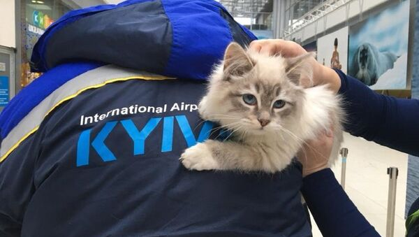 Пакінутая ў Кіеве кошка - Sputnik Беларусь