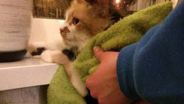 У Мінску кот захрас у батарэі - Sputnik Беларусь