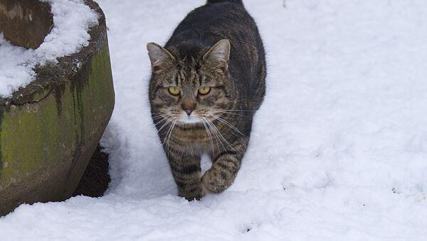 Кот і снег - Sputnik Беларусь