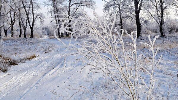 Зімовы лес - Sputnik Беларусь