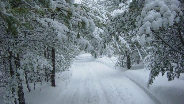 Зима в лесу - Sputnik Беларусь