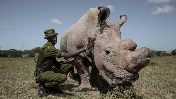Носорог Судан со смотрителем заповедника - Sputnik Беларусь
