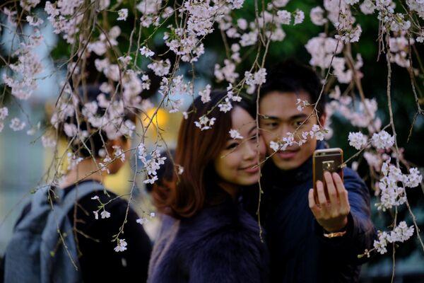 Парк Уэна - гэта самы папулярны і маляўнічы парк у Японіі для больш чым чатырнаццаці мільёнаў наведвальнікаў у год. Парк налічвае каля 10 000 дрэў, у тым ліку больш за 1200 вішнёвых дрэў. - Sputnik Беларусь