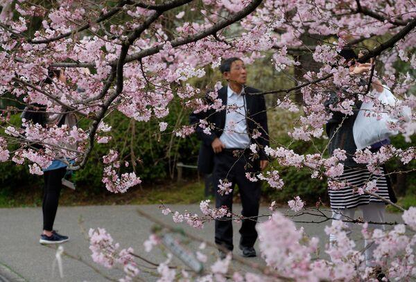 Вясна афіцыйна наступіла ў сталіцы 17 сакавіка, калі метэаралагічнае агенцтва Японіі абвясціла аб пачатку сезона цвіцення сакуры. - Sputnik Беларусь