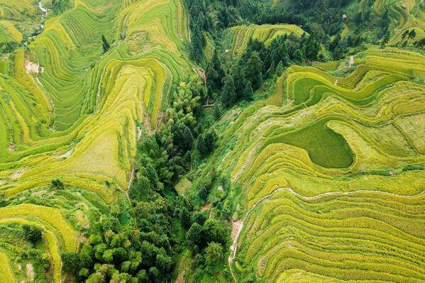 Террасные рисовые поля в юго-западной горной провинции Гуйчжоу в Китае. - Sputnik Беларусь