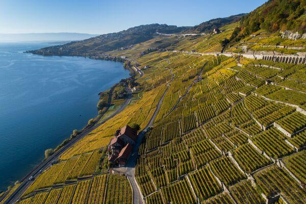 Террасовые виноградники Лаво над Женевским озером, Швейцария. Виноград здесь выращивают со времен Римской империи. Объект находится под защитой ЮНЕСКО. - Sputnik Беларусь