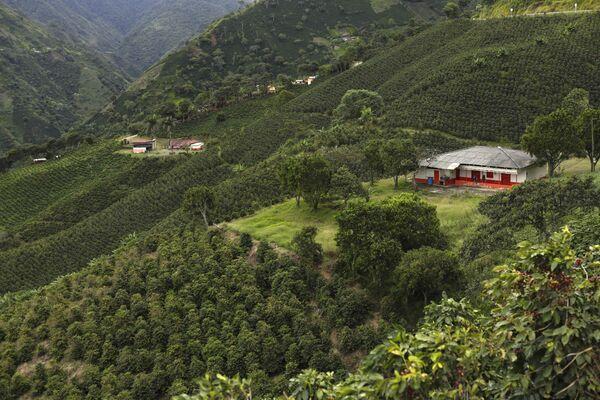 Вид на кофейные поля в горной местности недалеко от Сьюдад-Боливар, Колумбия. Это самый кофейный регион страны. - Sputnik Беларусь