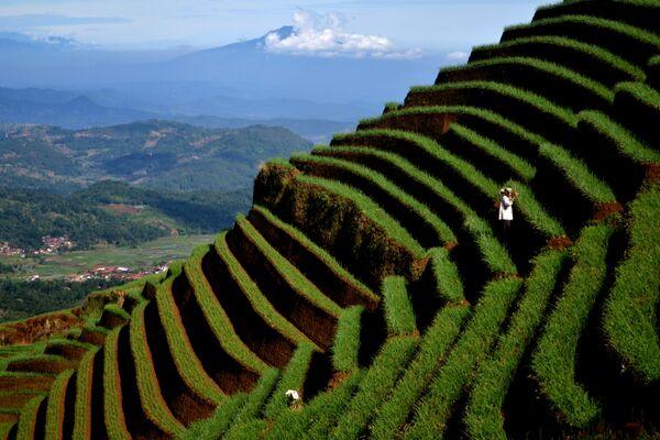Фермеры выращивают лук на склонах вулкана Чареме в западной части острова Ява, Индонезия. - Sputnik Беларусь