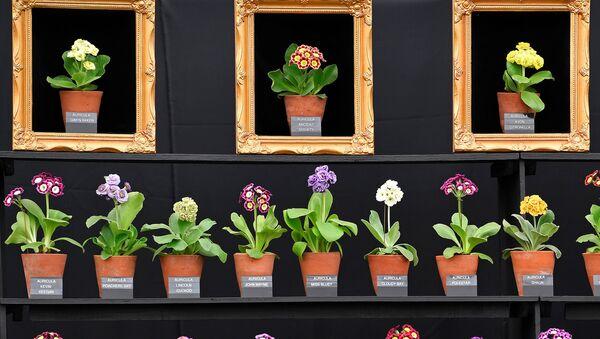 Chelsea Flower Show - Цветочное шоу Челси - Sputnik Беларусь