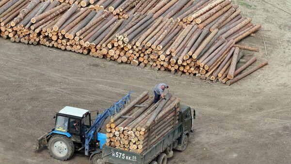 Заготовка леса на пилораме - Sputnik Беларусь