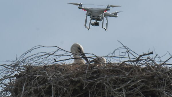 Дрон над гнездом аистов, архивное фото - Sputnik Беларусь