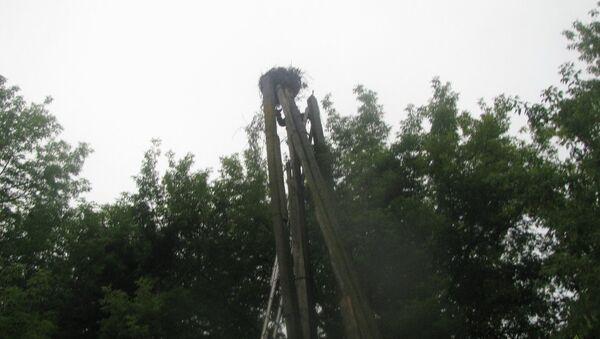 Гнездо, из которого выпали птицы - Sputnik Беларусь