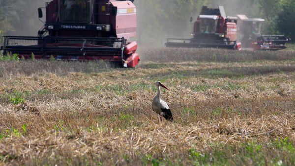 Уборка зерновых в Брестской области, архивное фото - Sputnik Беларусь