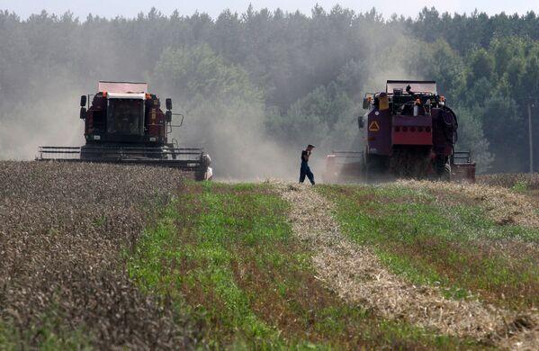 Уборка зерновых в Брестской области - Sputnik Беларусь