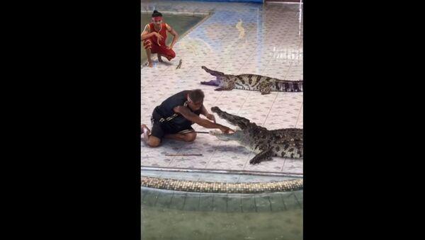 Крокодил напал на дрессировщика на глазах у зрителей - Sputnik Беларусь