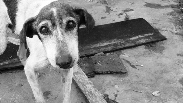 Бездомная собака, архивное фото - Sputnik Беларусь