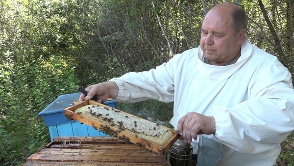 Как пчеловоды готовят мед к Медовому Спасу - Sputnik Беларусь