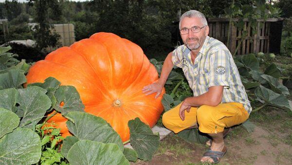 Сергей Гавранин вырастил тыкву весом более 400 килограмм - Sputnik Беларусь