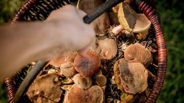 Сбор грибов, архивное фото - Sputnik Беларусь