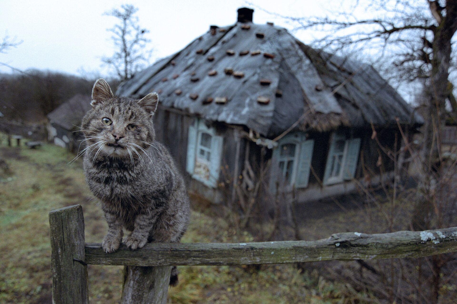 Ветхий дом в деревне - Sputnik Беларусь, 1920, 07.09.2021