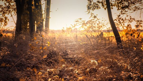 Восеньскі лес, архіўнае фота - Sputnik Беларусь