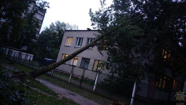 Дрэва, што ўпала падчас урагану дрэва - Sputnik Беларусь